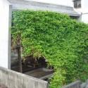MA of Wind / Ryuichi Ashizawa Architect & Associates © Kaori Ichikawa  MA of Wind / Ryuichi Ashizawa Architect & Associates 553ef5cde58ece502900007d ma of wind ryuichi ashizawa architect associates dsc 0007  2  125x125
